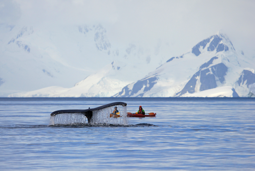 antartica-tours-solo female traveler network