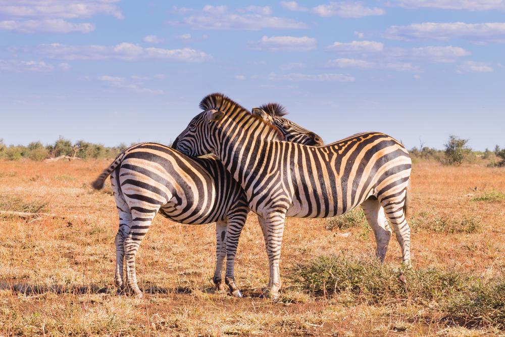 women only tour seeing zebras