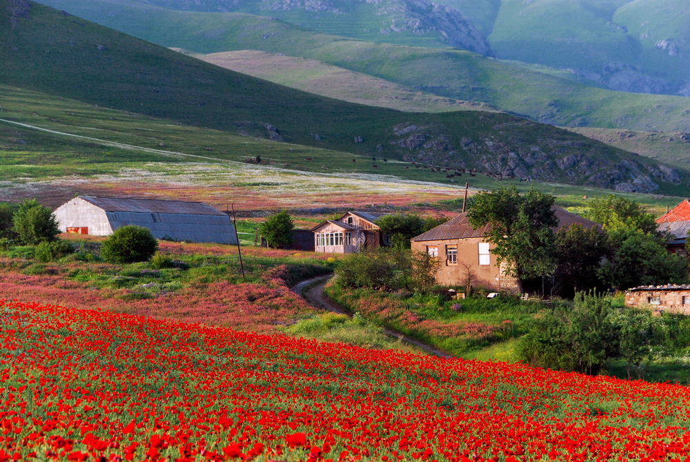 women traveling solo in poppy field armenia