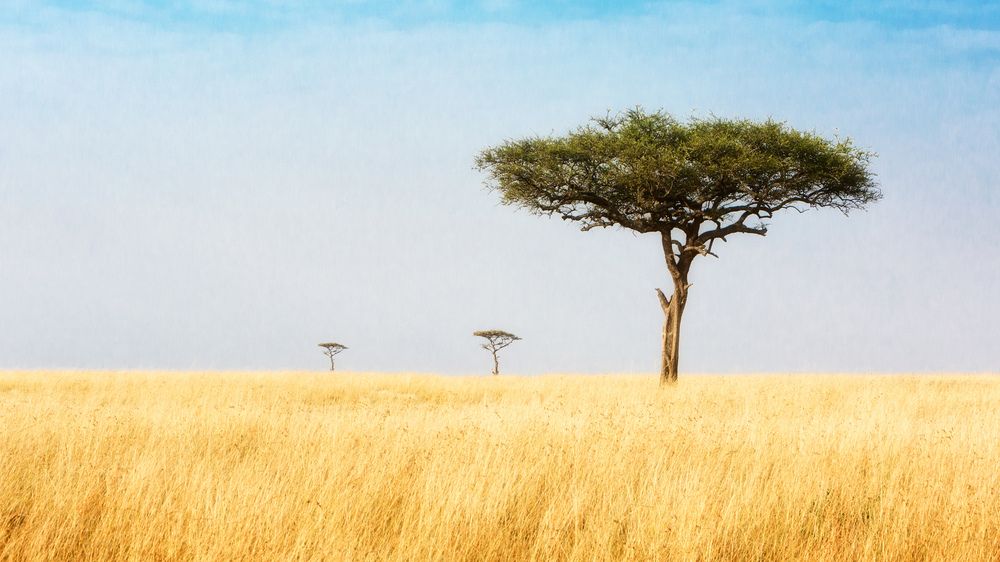 Trees in African bush