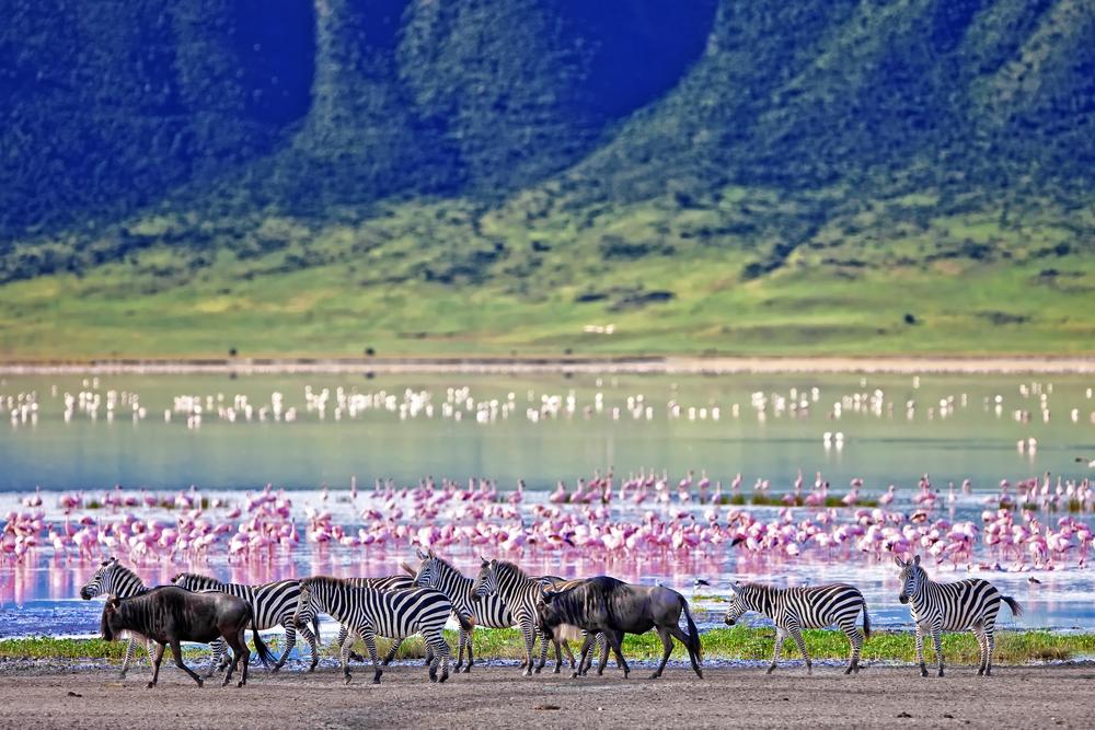 Massai Mara safari