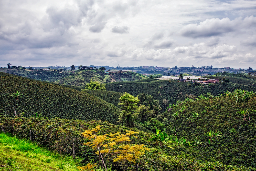 coffee plantation on women tour of Colombia