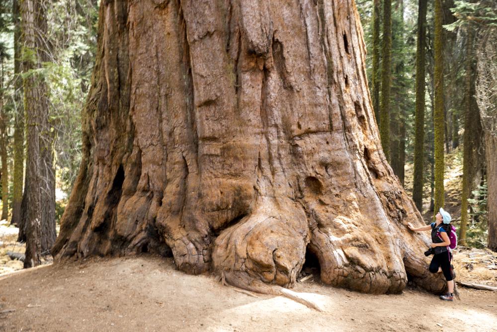 traveler on Yosemite tour