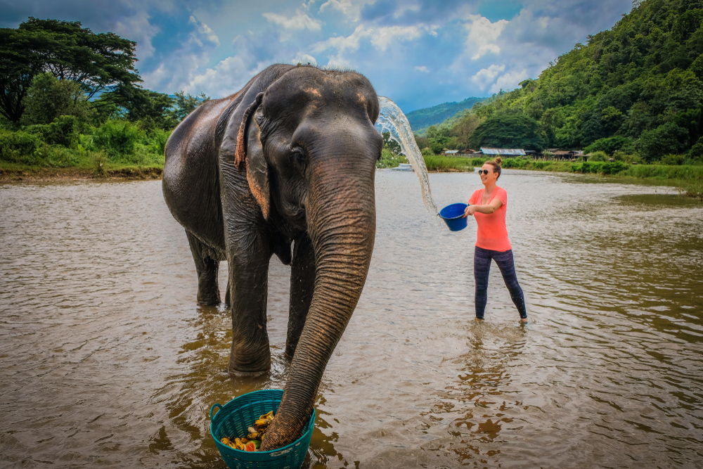 woman bathing elephant