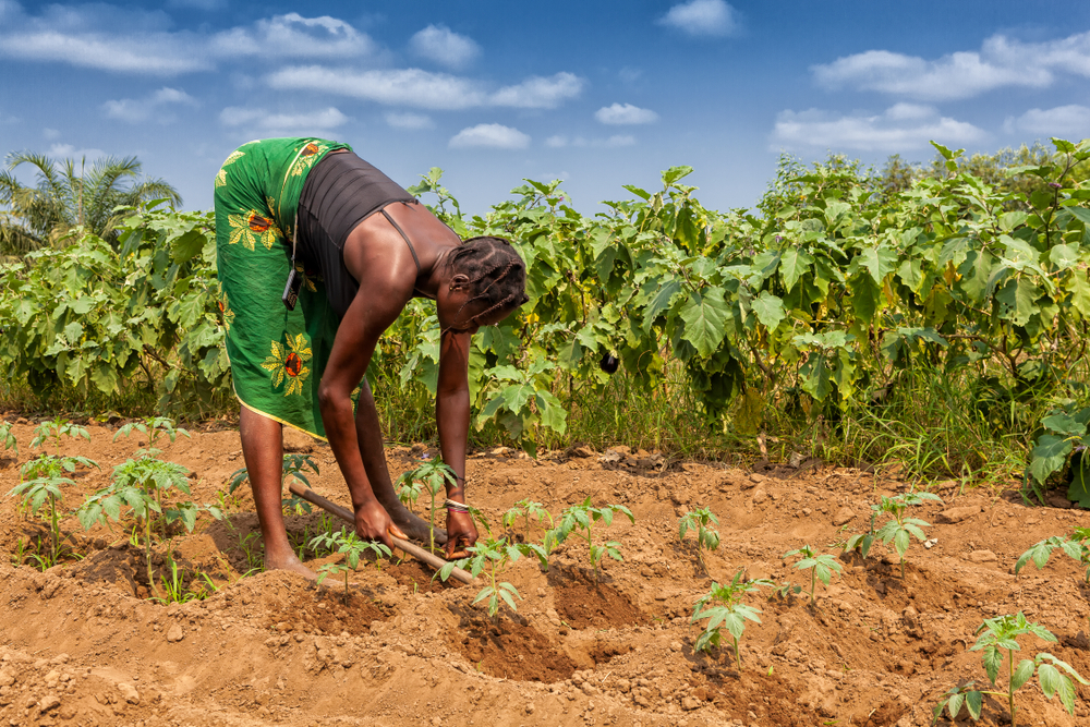 woman tending to a field in Angola