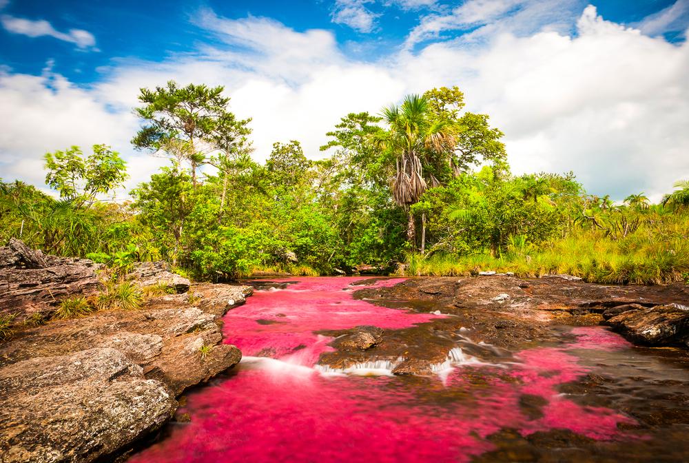 colorful river Caño Cristales, Colombia