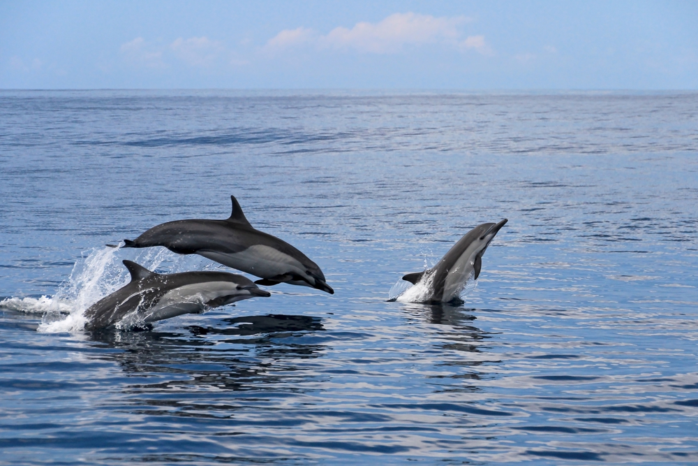 dolphins in Costa Rica women only tour