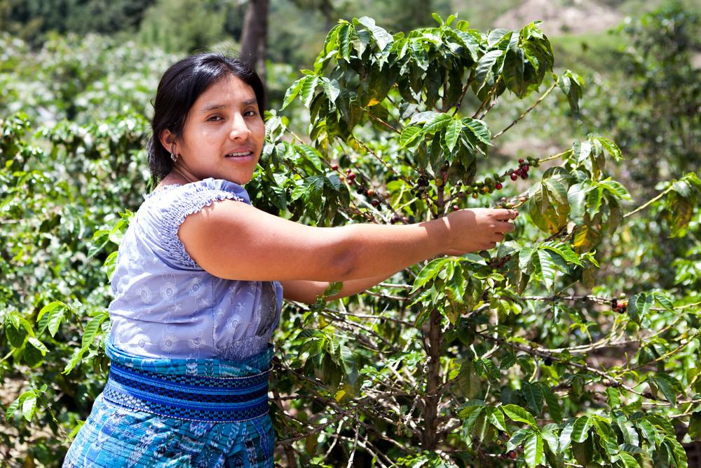 woman harvesting