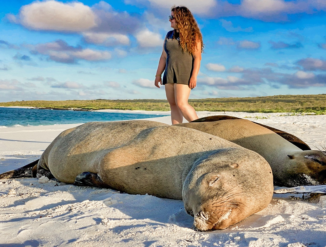 on the beach with sea lions