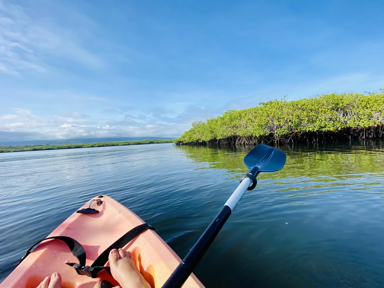 Tortuga Bay kayaking