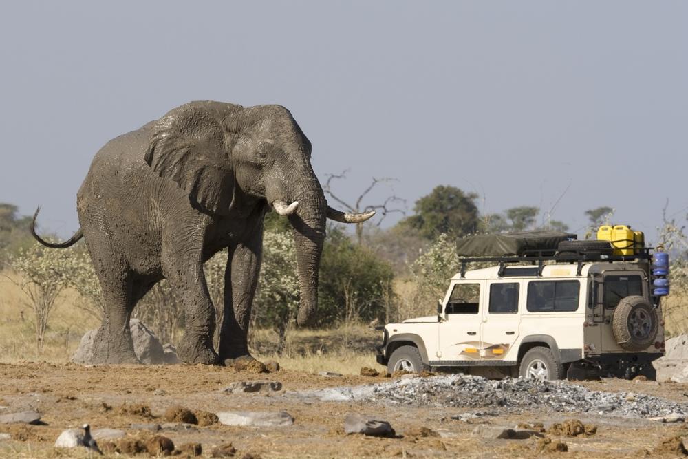 women looking at elephant on safari