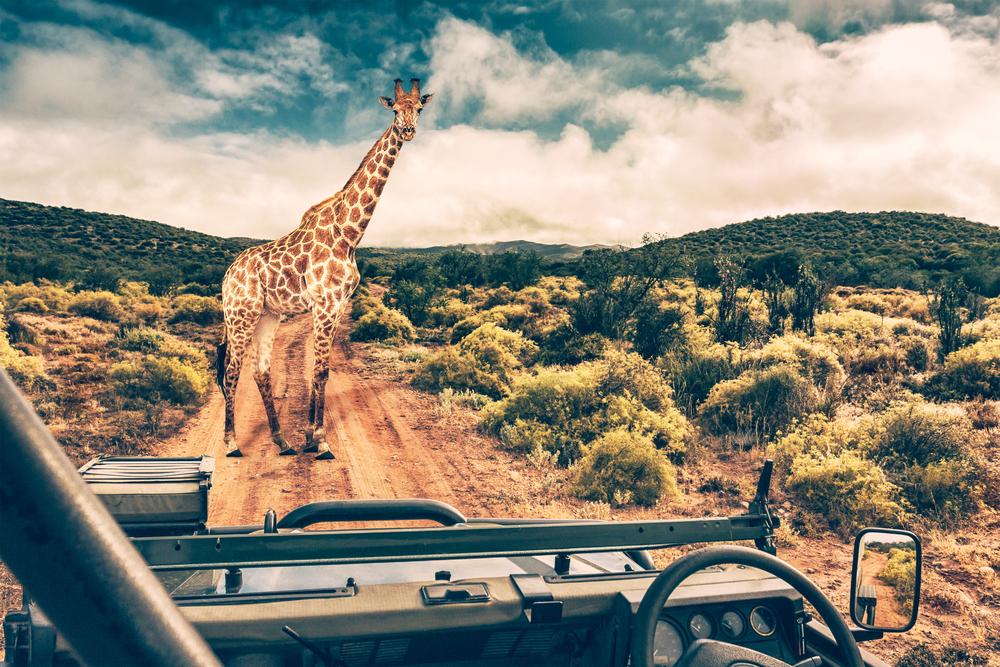 solo female travel safari in Southern Africa